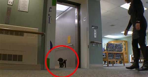 Θα σας κάνει να δακρύσετε: Γιατί πάει καθημερινά αυτός ο σκύλος πάει μία βόλτα (Βίντεο)