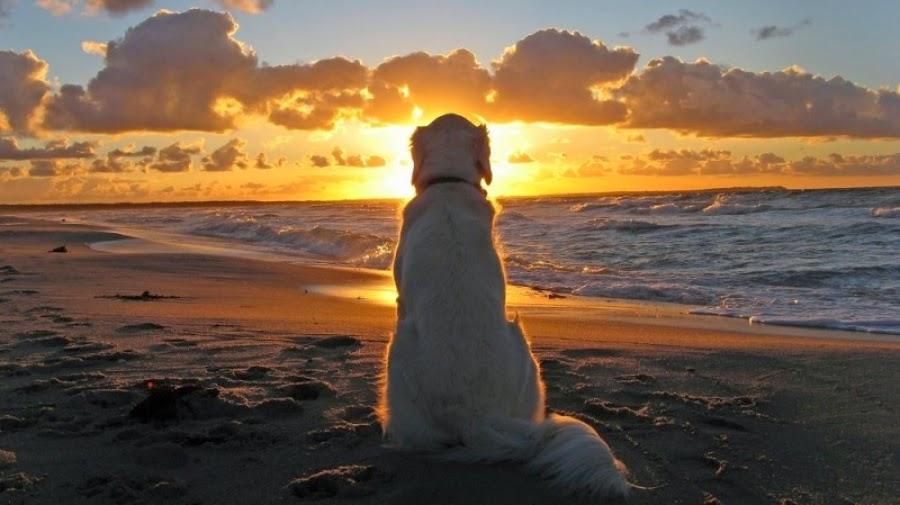 Σκύλος διαίσθηση