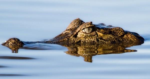 Δέκα τρομακτικά πλάσματα του Αμαζόνιου (Φωτογραφίες)