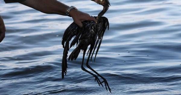 Σκληρές εικόνες από τον κόσμο των ζώων που δείχνουν τις ανεπανόρθωτες επιπτώσεις της ρύπανσης!