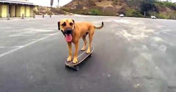 Ο σκύλος με το skateboard (Βίντεο)