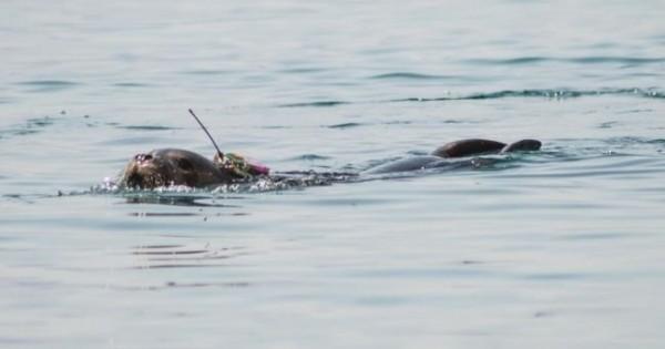 Μικρή φώκια πλατσουρίζει ελεύθερη στο Αιγαίο (Βίντεο)