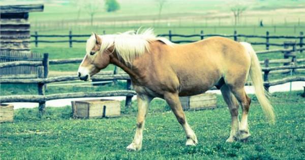 Τα άλογα ρίχνουν το στρες