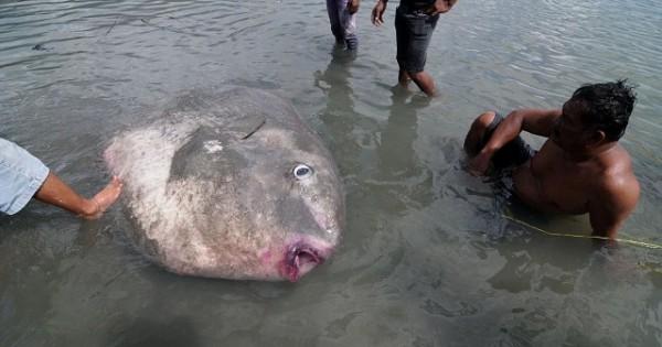 Πήγαν για ψάρεμα και γύρισαν με ένα… τέρας (Φωτογραφίες)