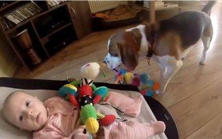 Μετανιωμένος σκύλος ζητά την πιο γλυκιά «συγνώμη»