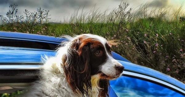 Πώς η βόλτα με το αυτοκίνητο μπορεί να γίνει εφιάλτης για τον σκύλο μας