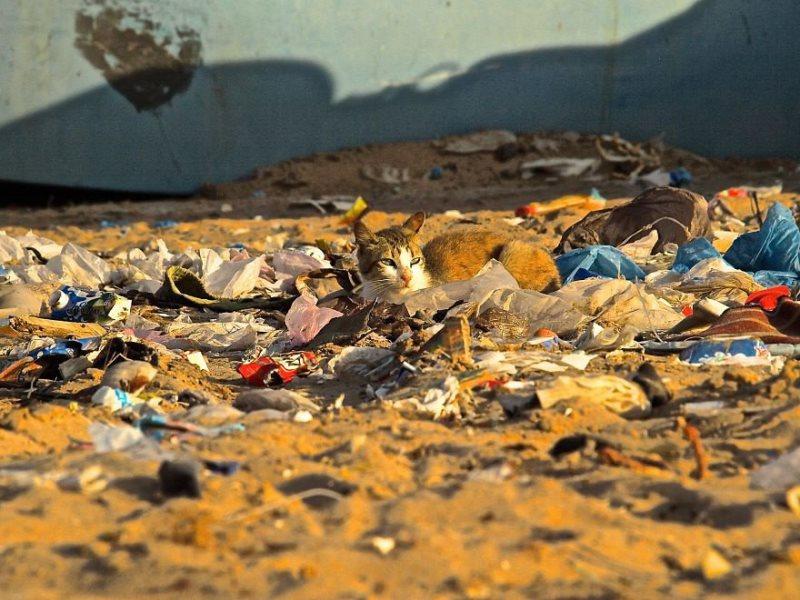 ρύπανση περιβάλλον μόλυνση