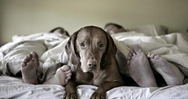 Μοιράζεστε το κρεβάτι με τον σκύλο σας; 5 λόγοι που αυτή η συνήθεια σας ωφελεί!