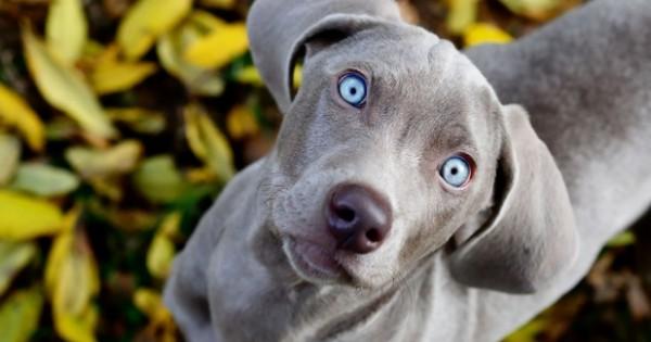 Πέντε μαθήματα επιτυχίας που μπορεί να σε διδάξει ο σκύλος σου