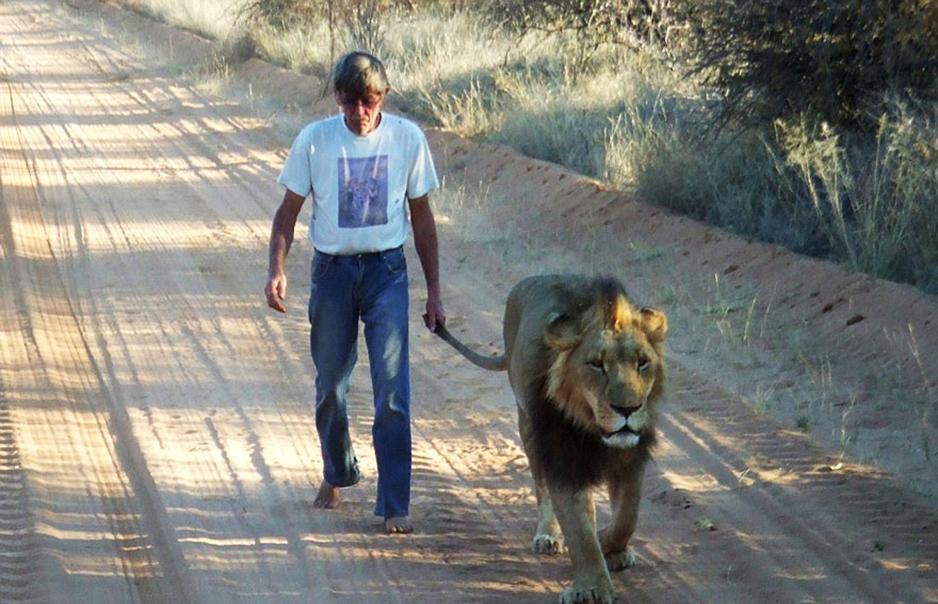 λιοντάρι Αφρική