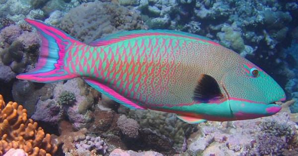 Πανέμορφα και πολύχρωμα τροπικά ψάρια