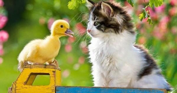 Αταίριαστα ζωάκια πιάνουν φιλίες (video)