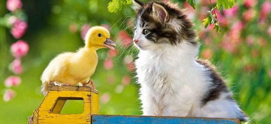 φιλίες ζωάκια