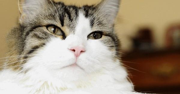 Όσκαρ: Ο γάτος που όποιον πλησιάζει, πεθαίνει (Εικόνες)