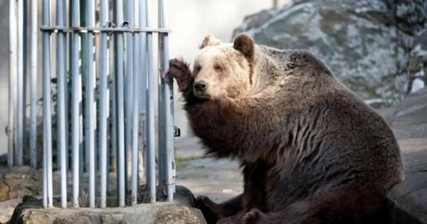 Φεύγουν τα άγρια ζώα από τον Δημοτικό Ζωολογικό Κήπο Θεσσαλονίκης