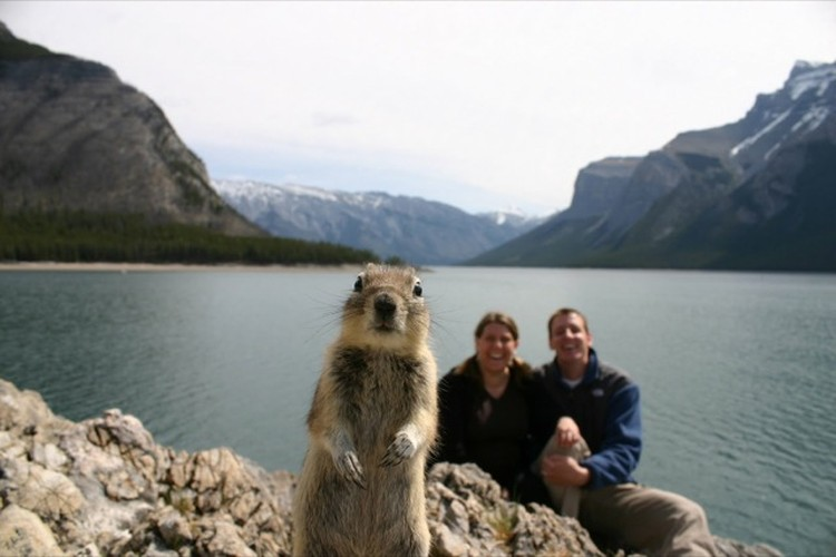 Funny-Animal-Photobombs-01
