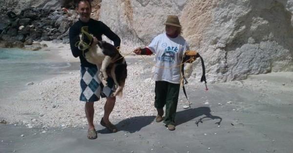 Διέσωσαν τον σκύλο που έχει εγκλωβιστεί σε απρόσιτη παραλία της Κεφαλλονιάς