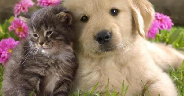 Συμπτώματα Καρκίνου σε γάτα και σκύλο