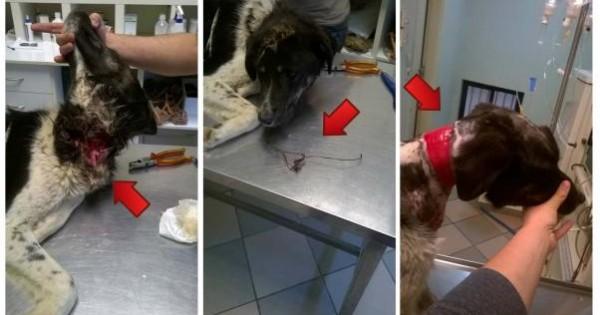 Τρίκαλα: Έσωσαν τον σκύλο που σάπιζε από το σύρμα στο λαιμό του