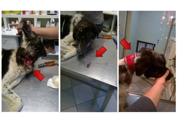 Τρίκαλα Σκύλος διάσωση