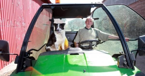 Έγινε κι αυτό: Σκύλος πήρε το τρακτέρ και έκανε βόλτες!