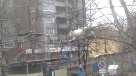 Το πονηρό κοράκι τρολάρει που τη γάτα (Βίντεο)