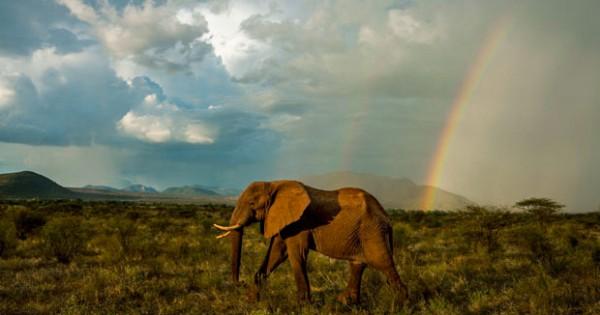 Μαγευτικό ταξίδι του μυαλού στην άγρια φύση της Αφρικής (video)