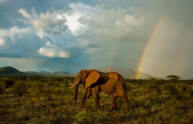 Αφρική άγρια φύση