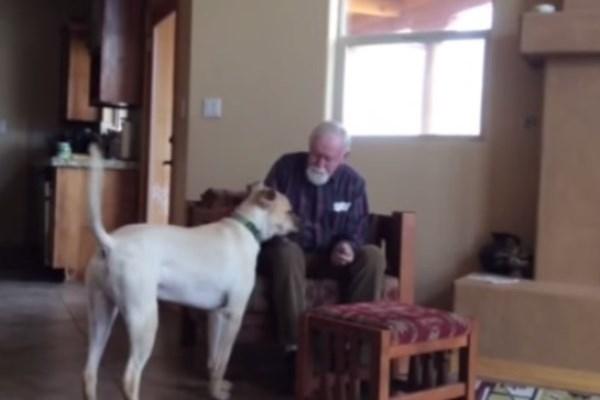 Σκύλος Αλτσχάιμερ