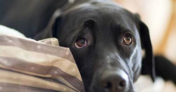 Μόλις φέτος απαγόρευσε την κτηνοβασία η Δανία…