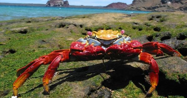 Η εκπληκτική άγρια ζωή στα νησιά Γκαλαπάγκος
