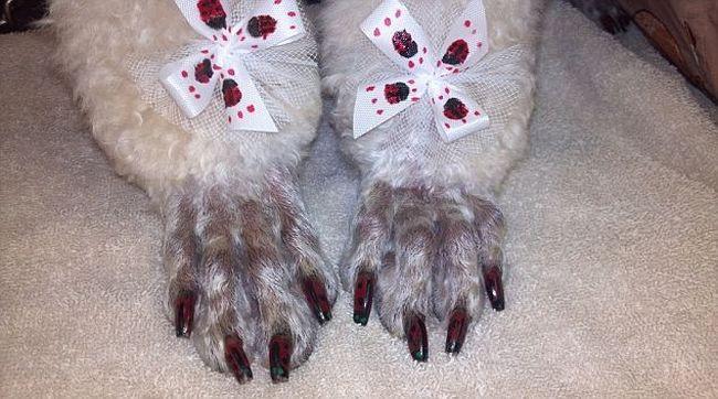 πεντικιούρ Νύχια σκύλου Νύχια Μανικιούρ