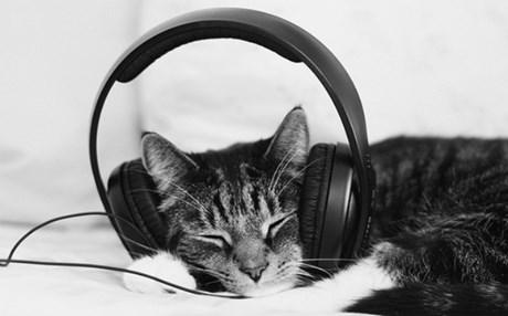 Η κλασική μουσική κάνει καλό… στις γάτες!