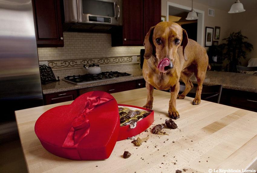 choco-dog-www