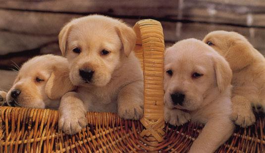 10 λόγοι για να προτιμήσετε το σκύλο ως κατοικίδιο