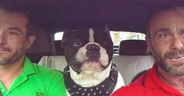 Αυτός ο σκύλος καταλαβαίνει άψογα 4 γλώσσες, αλλά αυτό δεν είναι το περίεργο της υπόθεσης…