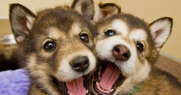 Αυτά τα σκυλάκια είναι αχώριστοι φίλοι! Δείτε τις γλυκές φωτογραφίες!