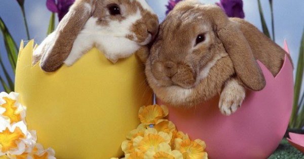 Τα ζώα δεν είναι δώρα για το Πάσχα!