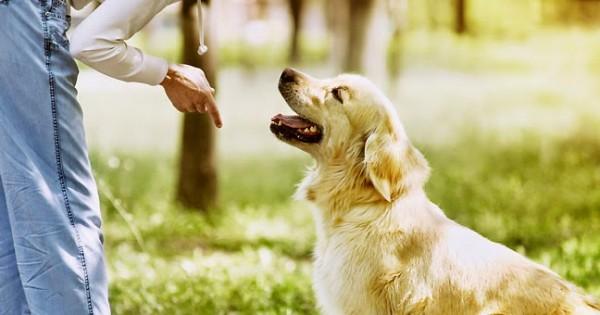 Τα εννέα «δεν» στην εκπαίδευση του σκύλου μας