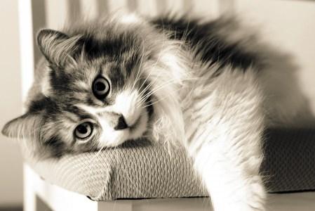 Πότε και γιατί οι γάτες μπήκαν στα σπίτια των ανθρώπων;