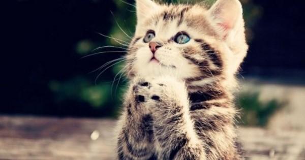 Τι σημαίνουν τα διαφορετικά νιαουρίσματα που χρησιμοποιεί η γάτα σου για να επικοινωνήσει μαζί σου