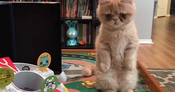 Αυτός είναι ο Γιώργος! Η γάτα που θέλει να ζει στα δύο της πόδια σαν άνθρωπος!