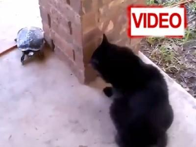 Έχετε δει… γάτα να παίζει κρυφτό με χελώνα; (video)