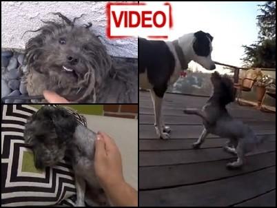 Δραματική διάσωση: Σκυλάκι κρυβόταν φοβισμένο στο δρόμο επί ένα χρόνο (video)
