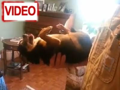 Πολύ γέλιο! Αυτός ο σκύλος κάνει τον… ψόφιο κοριό!