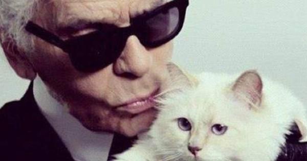 Αυτή είναι η πλουσιότερη γάτα στον κόσμο – Πώς έχει βγάλει 3 εκ. ευρώ (εικόνες & βίντεο)