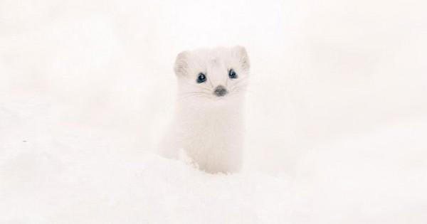 Είδη προς εξαφάνιση: Τα πιο γλυκά ζωάκια ζουν στο Hokkaido της Ιαπωνίας