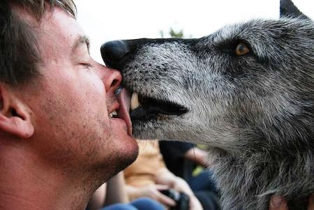 Οι λύκοι πιο ανεκτικά και ευγενή ζώα από τους σκύλους