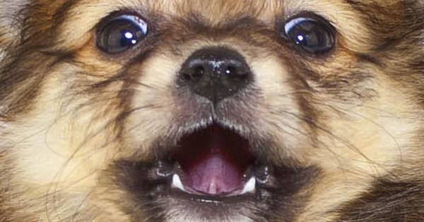 Χρήσιμα κόλπα για ιδιοκτήτες σκύλων