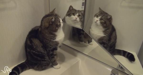 Γάτες και καθρέφτες (βίντεο)